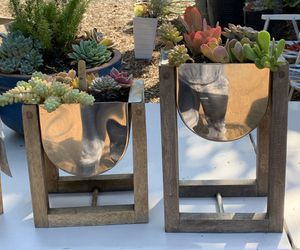 New potted succulents 🌵 makes great gifts for Sale in La Habra, CA