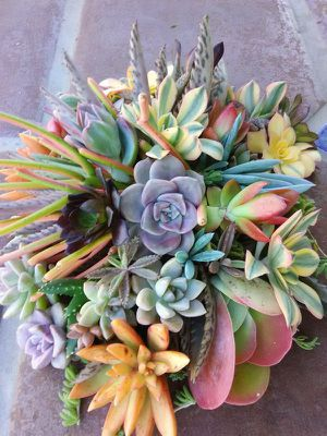 50 Assorted Succulent and Cactus Cuttings for Sale in San Diego, CA