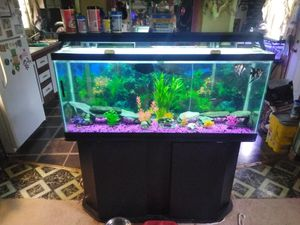 55 gallon fish tank for Sale in Philadelphia, TN