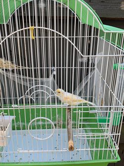 Canary Cage + for Sale in Austin,  TX