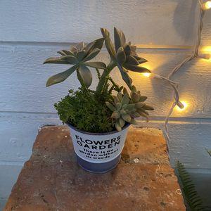 Succulent Planter for Sale in Newport Beach, CA