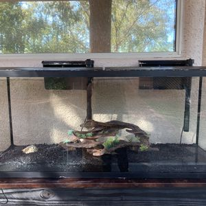 55 Gallon Fish Tank w/ Stand And Accessories for Sale in Summerlin South, NV