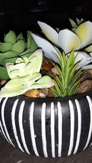 Fake plants for Sale in Phoenix, AZ