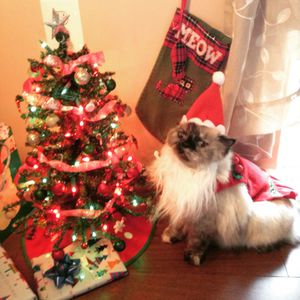 Christmas Santa pet costume for Sale in Fairfax, VA