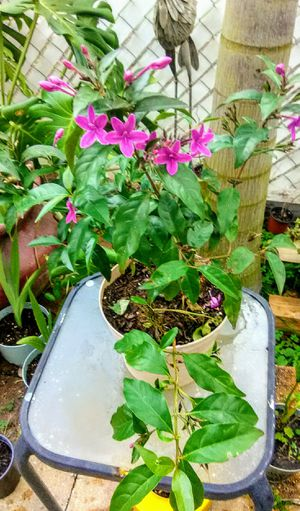 Pot of Purple Flowers for Sale in Poinciana, FL
