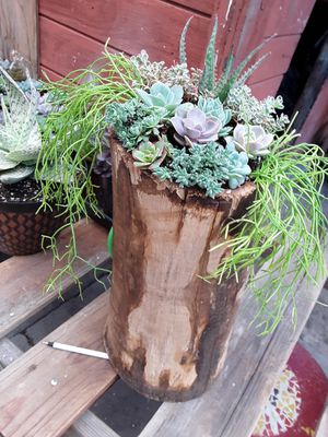 """16"""" wood trunk with succulent plants for Sale in La Mirada, CA"""