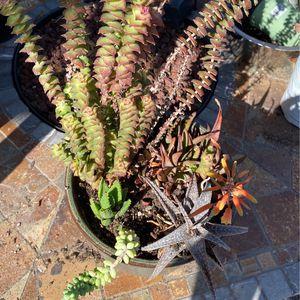 Succulents and Cactus In Ceramic Planter for Sale in Irvine, CA