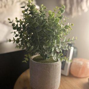 Plastic Plant in Off White/Grey Pot for Sale in Alexandria, VA