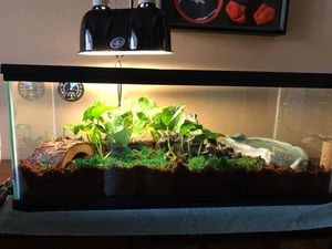 Reptile/Amphibian Aquarium with water dish, log, tree and lamp for Sale in Queen Creek, AZ