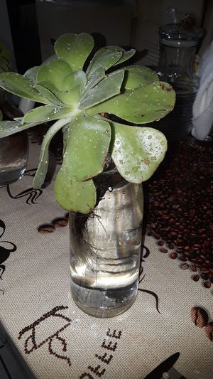 planta for Sale in South Gate, CA