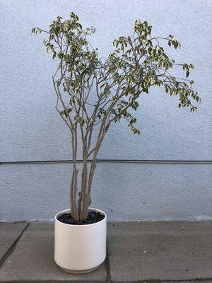 GAINEY (C-12) Planter w/Plant - Mid Century Modern for Sale in Newport Beach, CA