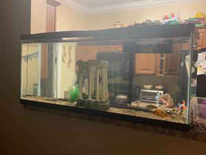 55 gallon tank fish for Sale in Nashville, TN