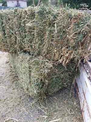 Hay/alfalfa mix bales for Sale in Albuquerque, NM