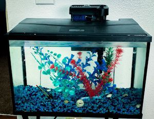 Perfect little fish tank for Sale in Brandon, FL
