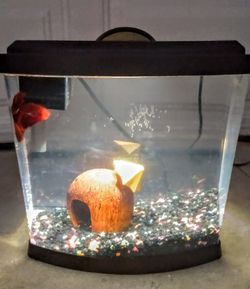 Fish Tank 2 Gallon with Colored Rocks, Filter, LED Lighted Lid and Net for Sale in Whittier,  CA