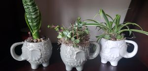 Elephant succulent planter for Sale in Brownstown Charter Township, MI