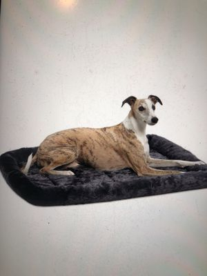 Pet bed for Sale in Cleveland, OH
