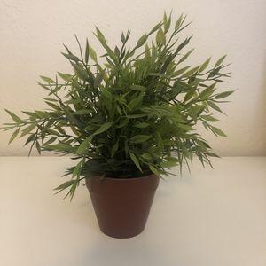 Fake Plant for Sale in Sacramento, CA