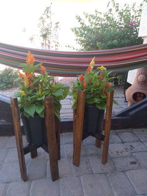 Fall flowers for Sale in El Mirage, AZ