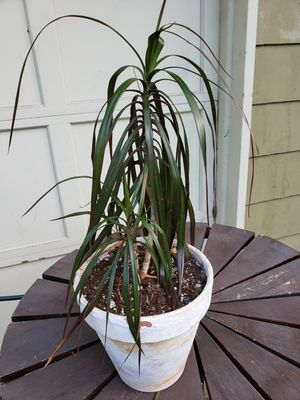 House plant for Sale in Mukilteo, WA