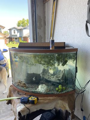 Beautiful 40 gallon tank for Sale in Moore, OK