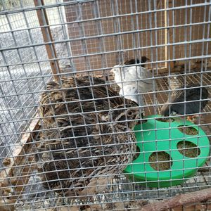 Quail Cage for Sale in Antioch, CA