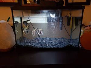 Angel fish and TopFin tank with accessories for Sale in Fremont, CA