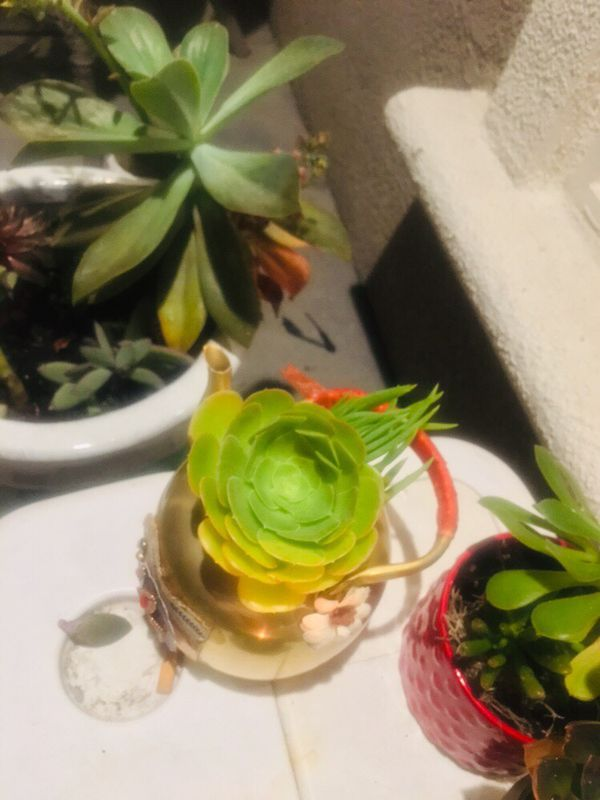 Succulents in beautiful vintage tea kettle