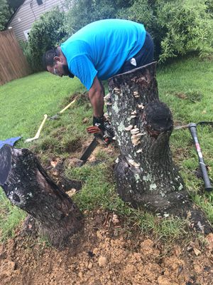 Free fire wood pls take as you need for Sale in Chillum, MD