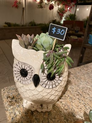 Succulent off white owl for Sale in Riverside, CA