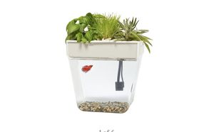 Auqaponic fish tank for Sale in Fallsington, PA
