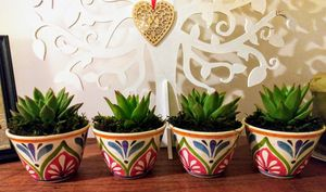 4 Real Succulent Arrangements in Colorful Pots for Sale in Los Angeles, CA