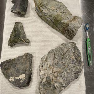 Aquarium Stone for Sale in Phoenix, AZ