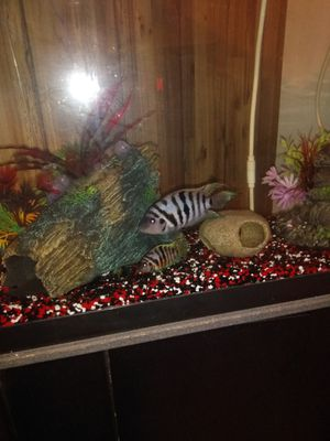 Fish tank for Sale in Phoenix, AZ