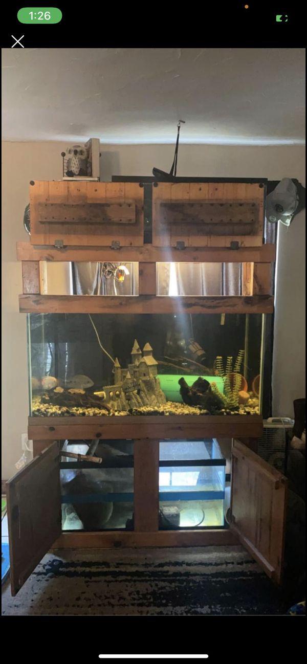 90 gallon fish tank setup