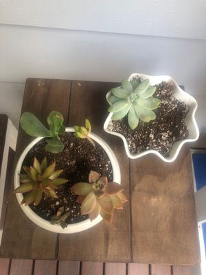 Two succulent pots for Sale in Portland, OR