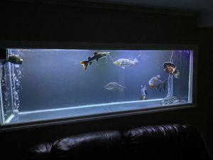 Fish tank read description for Sale in Queens, NY