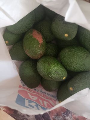 Homegrown Avocado for Sale in Ontario, CA