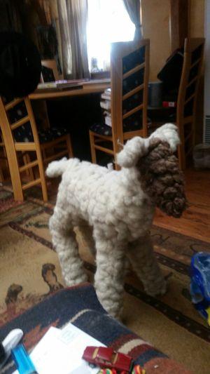 100% Cotton Lamb for Sale in Payson, AZ