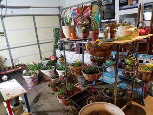 Plant sale for Sale in Farmington, MN