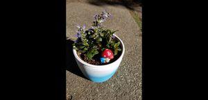 SUCCULENT SATURDAY JUNE 27TH . SAN LORENZO. HUNDREDS OF PLANTS for Sale in San Lorenzo, CA