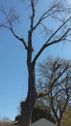 Corto árboles for Sale in Hyattsville, MD