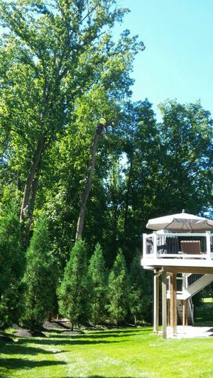 Cut trees: for Sale in Hyattsville, MD