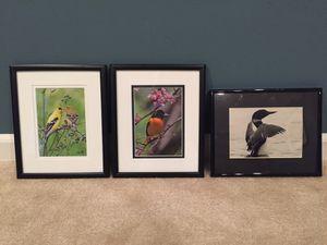 Set of 3 framed bird photographs. for Sale in Hamilton, OH