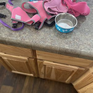 Small Harnesses, Bowls And Leash for Sale in Taylorsville, UT