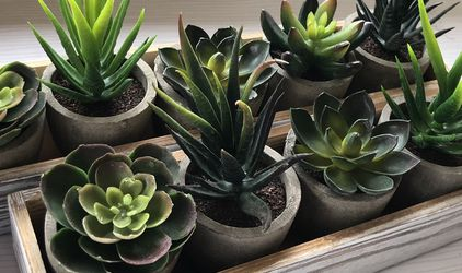 2 sets of 5 Mini Fake Succulent Cactus Aloe Potted Plant for Sale in Hacienda Heights,  CA