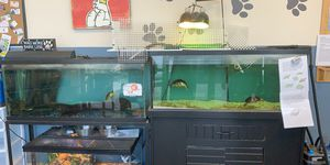 Turtle Aquarium for Sale in St. Cloud, FL