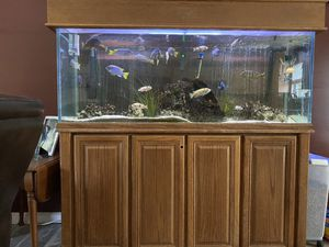 Fish tank for Sale in Portage Des Sioux, MO