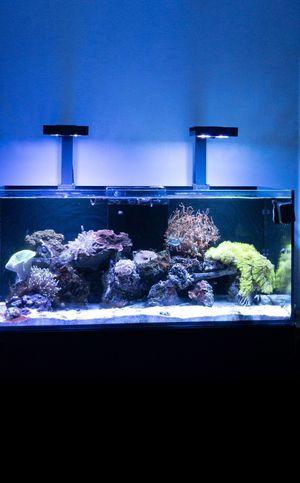 RedSea Reefer 350 saltwater aquarium for Sale in Hemet, CA