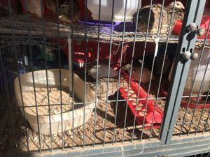 Godornises for Sale in Dallas, TX